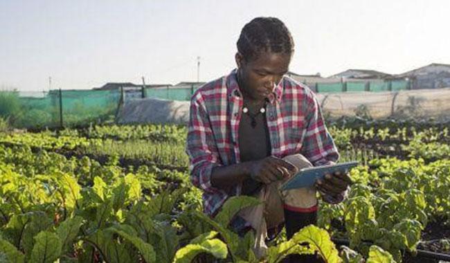 RENFORCEMENT DE CAPACITES: L'Union Africaine lance des bourses de Master et de formations courtes en recherche et innovation agroalimentaire