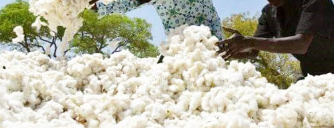 PRODUCTION COTONNIERE EN AFRIQUE : Le Burkina Faso «file un mauvais coton»