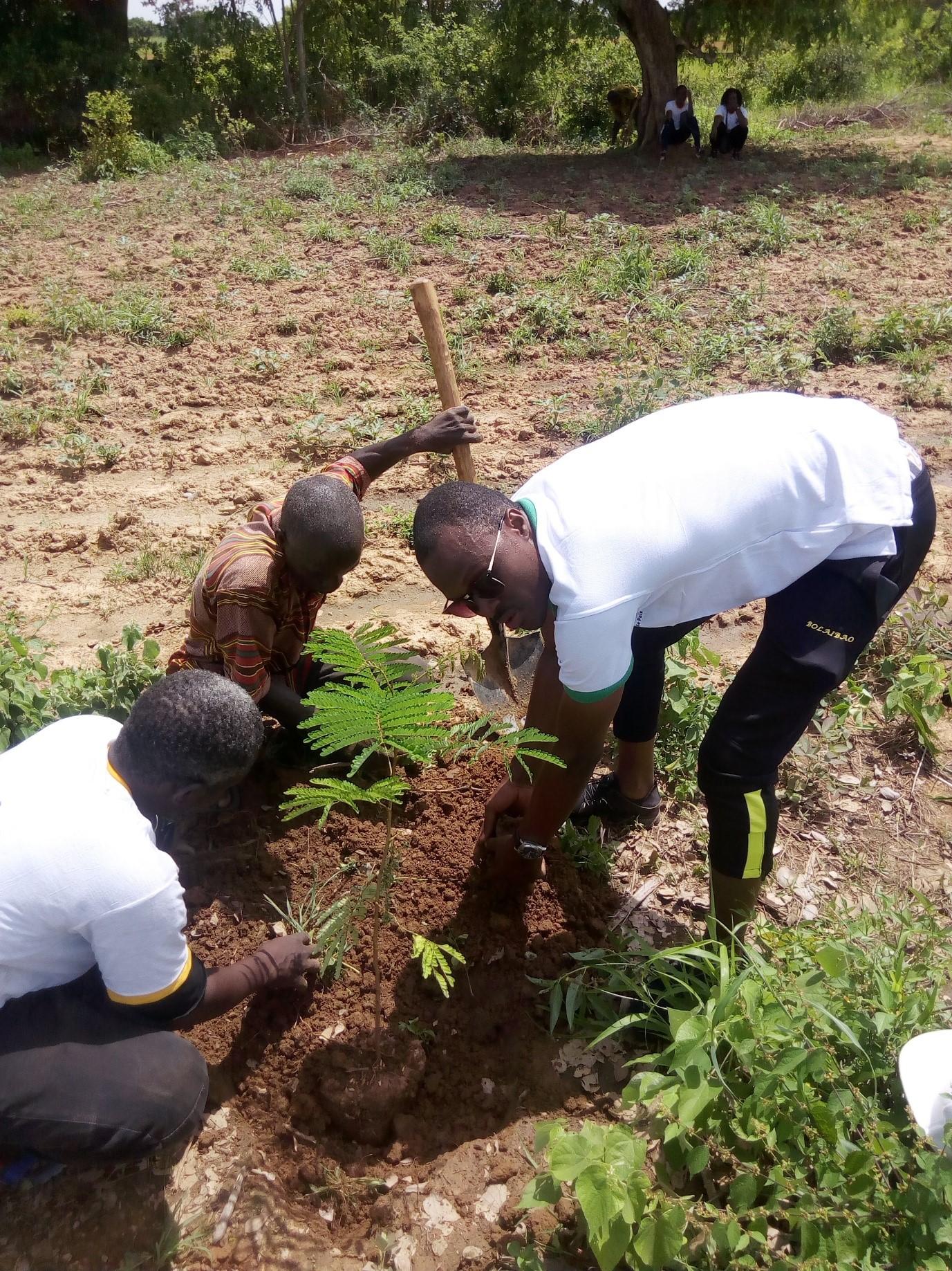 REBOISEMENT : Des fidèles de Blaise Compaoré préparent l'ombre pour son retour