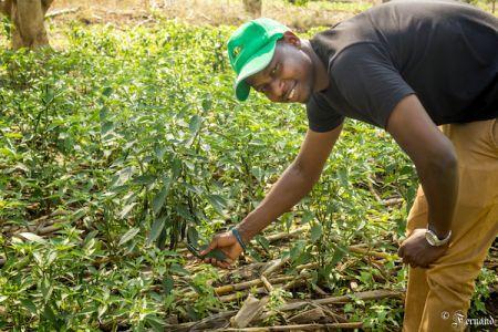 RWANDA : A 30 ans, ce jeune agro entrepreneur va faire du piment la première exportation agricole du pays