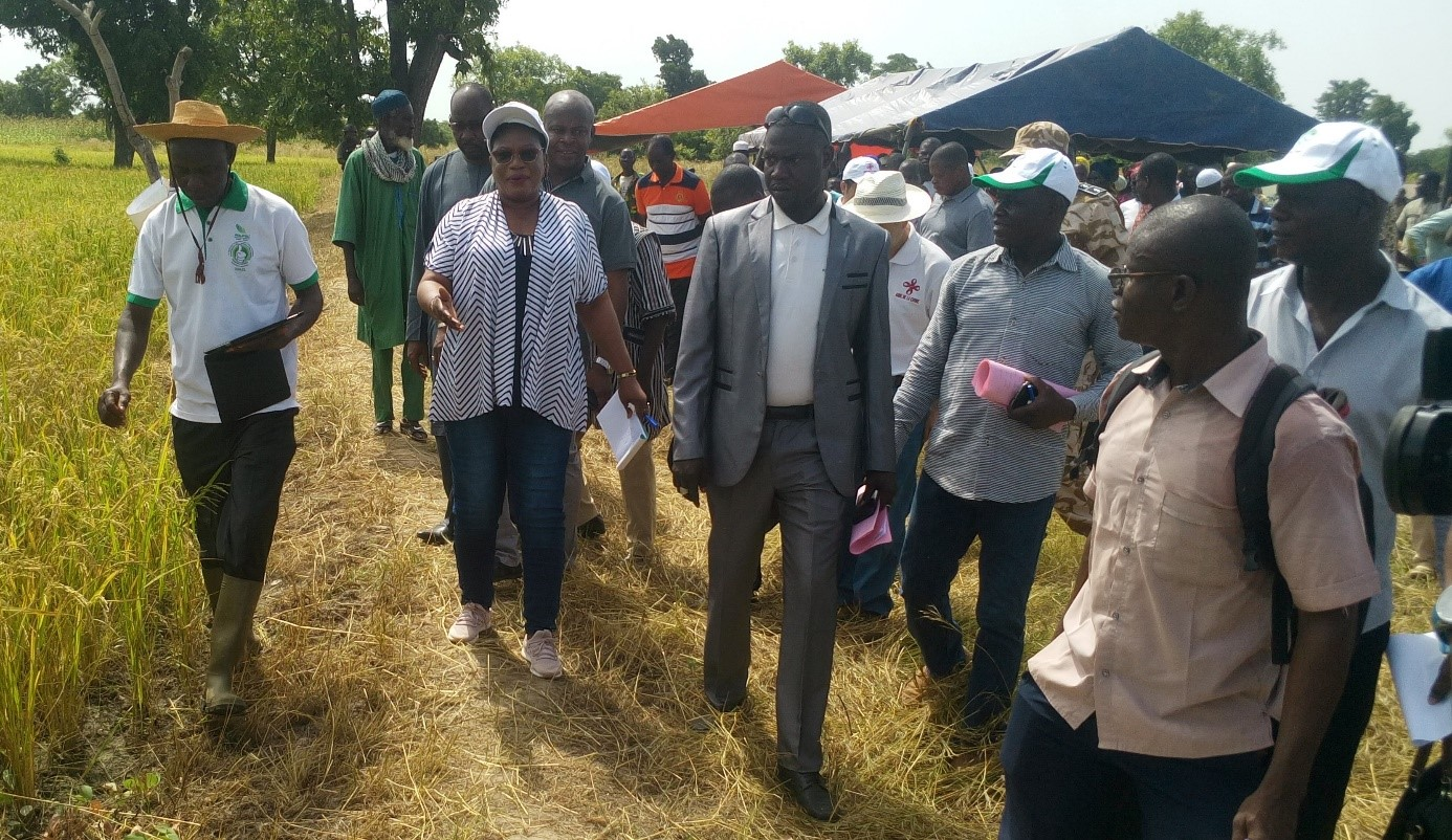 AGRICULTURE : Les autorités de la région du Centre-ouest à la découverte du bas-fond rizicole de Youloupo