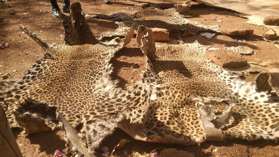 Protection de la Faune au Burkina Faso : Deux Trafiquants condamnés à Fada