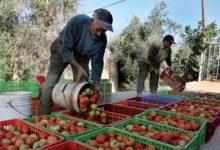 Le Plan Maroc Vert, un cas d'école à enseigner et à pérenniser dans le secteur agricole