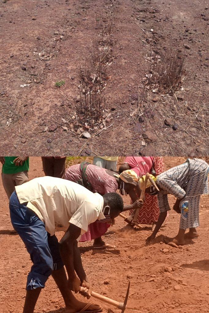 Projet Climat:                       Une force qui tacle la sahélisation du Centre-ouest Burkinabè