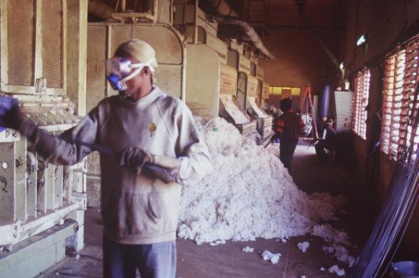 Togo: Privatisation: Après TOGOCOM , le coton togolais dans les mains Singapouriennes