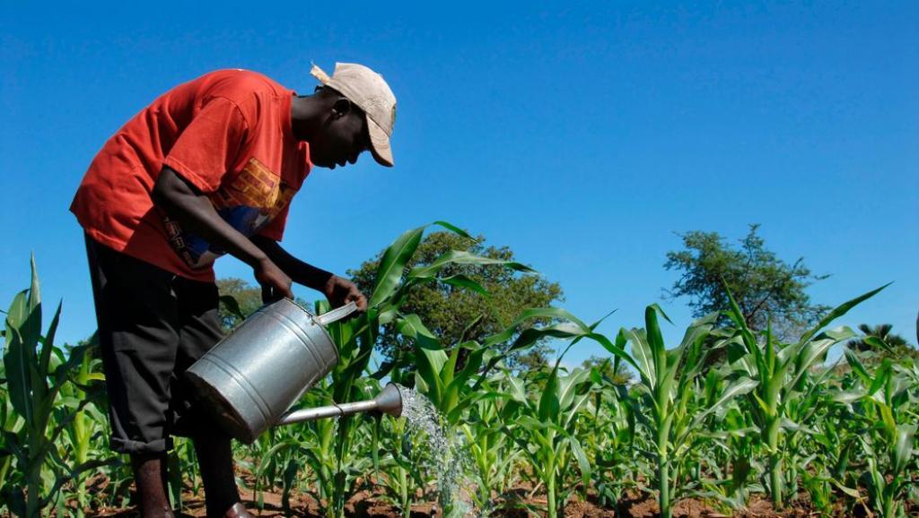 RDC : la faculté des sciences de l'UNIKIS découvre un engrais capable de fertiliser le sol pendant 400 ans