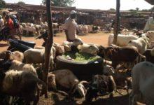 Tabaski 2020:  Le marché à bétail de Bobo-Dioulasso enregistre une ambiance morose malgré le prix abordable des moutons