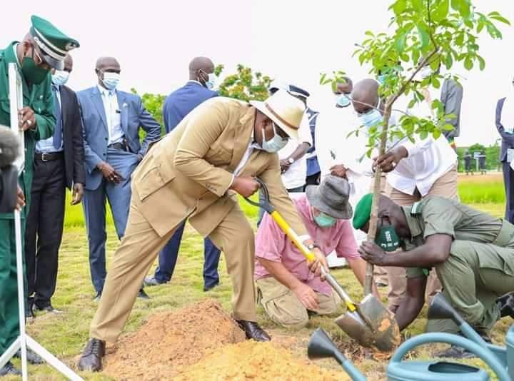 Sénégal: Planter un arbre bientôt obligatoire