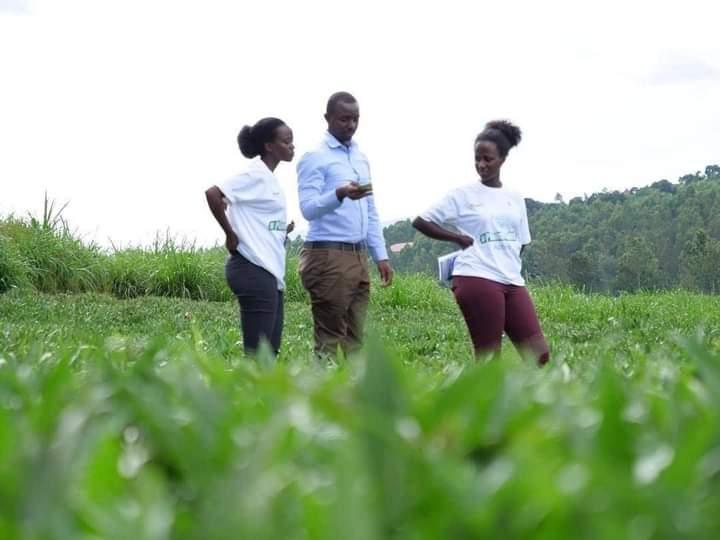 Au Rwanda, la passion de l'agriculture branche les jeunes et stimule l'économie