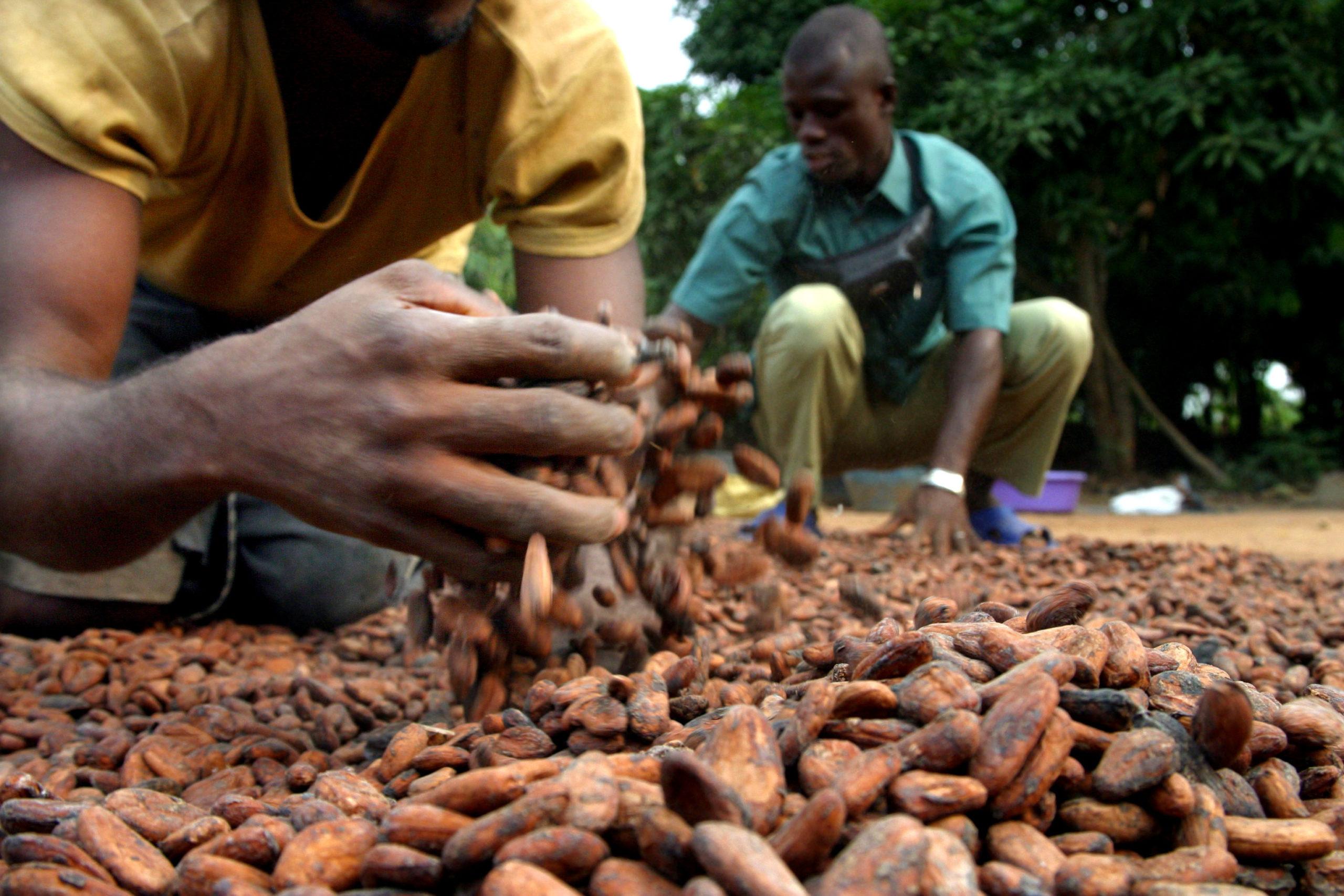 Ghana :             La production de cacao devrait atteindre 900 000 tonnes en 2020/2021