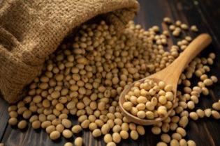 Togo: L'exportation du soja a généré 50 milliards de FCFA au cours des 10 derniers mois