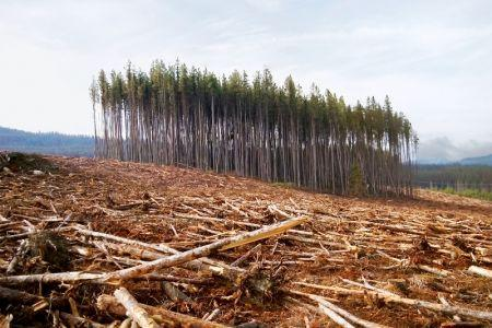 Ghana : Le Fonds vert pour le climat va allouer 30 millions $ de subvention pour un projet de lutte contre la déforestation et de promotion du karité
