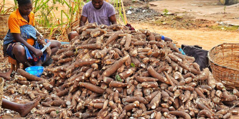 Nigéria :De l'électricité à partir du manioc