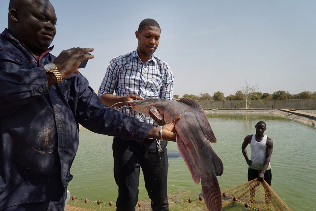 Mali : Les secteurs de la pêche et de l'aquaculture vont recevoir 15 millions de dollars pour leur développement