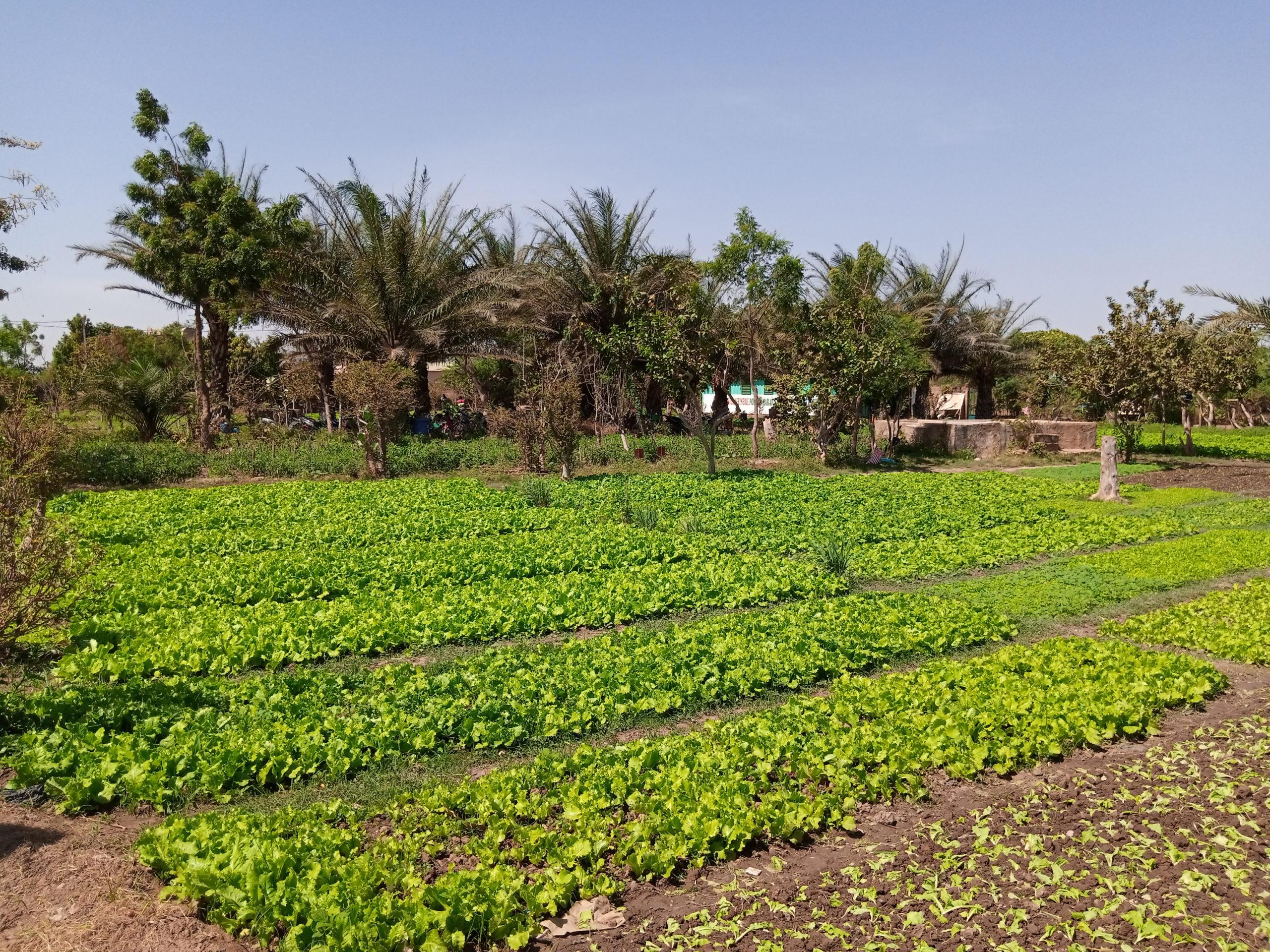 Côte d'Ivoire : 14 millions de dollars en faveur des petits producteurs et pour les femmes dans le centre du pays