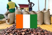 Côte d'Ivoire: le pays a du mal à vendre les droits d'exportation sur sa récolte de cacao
