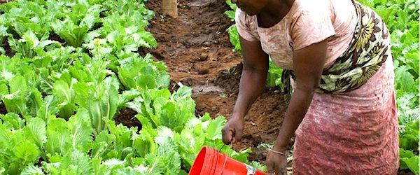 Le Gabon adopte une stratégie ambitieuse pour réduire de 50% ses importations alimentaires d'ici 2022.