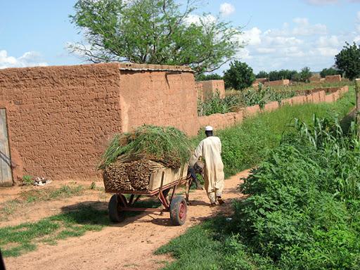 Niger : Le PRECIS pour assurer la sécurité alimentaire à 1,5 million de personnes vivant en milieu rural.