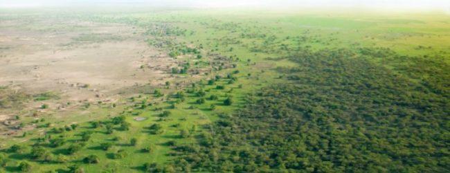 Le projet de la Grande Muraille Verte reçoit plus de 14 milliards de dollars pour reverdir le Sahel.