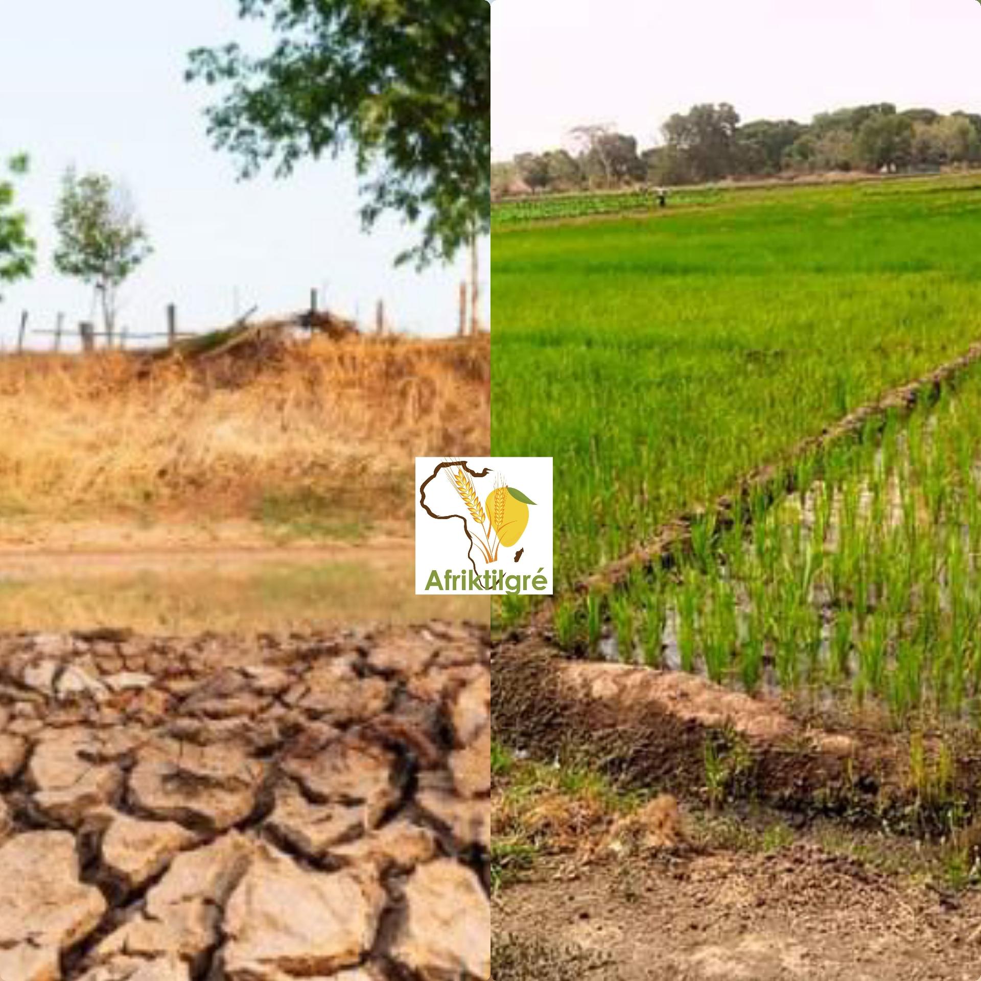 70 000 ha dégradés seront bientôt réhabilités et irrigués au Niger