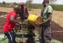 Kenya: une startup transforme le fléau des criquets pèlerins en bénédiction pour les agriculteurs