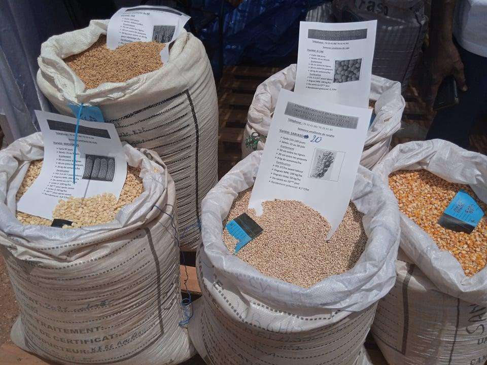 J-PROSAC 2 : 6 500 tonnes de semences cherchent acheteurs