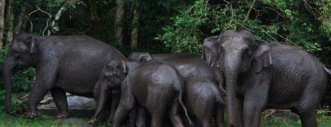 Inventaire forestier et faunique ivoirien: La Côte d'Ivoire perd 14 millions d'hectares de forêt