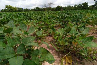 Burkina Faso: Le bilan de la campagne agricole est jugé passable dans plusieurs régions du pays à la date du 11 au 20 juillet 2021