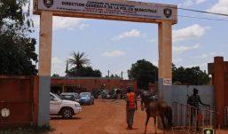 Ouagadougou : 300 têtes d'animaux mis en Fourrières en septembre ( Police Municipale)